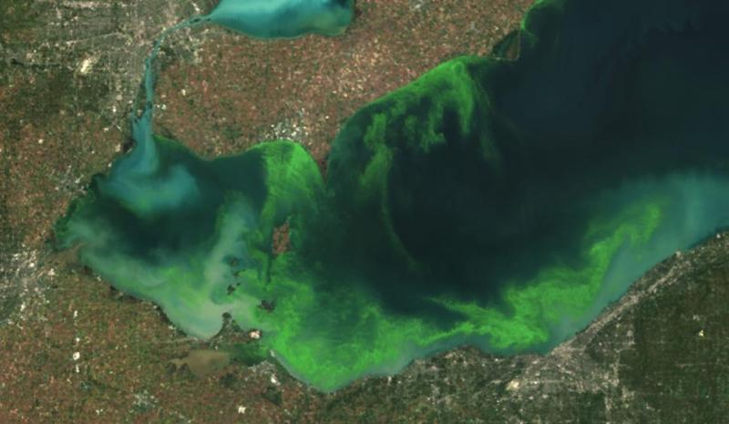 The algae bloom from space, circa 2011. Toledo is off the westernmost tip of Lake Erie.