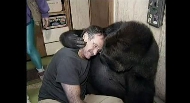 Robin Williams meets the famous gorilla Koko.